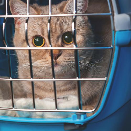 Kat dierenkliniek de bilt for Kattenpoep in de tuin